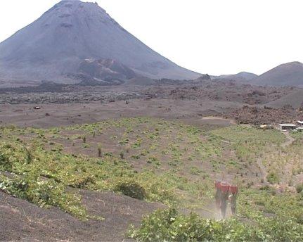 Fogo (Capo Verde), coltura della vite nella caldera del vulcano - 1/30