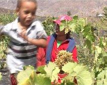 Fogo (Capo Verde), coltura della vite nella caldera del vulcano - 3/30